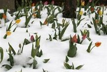 spring / signs of spring