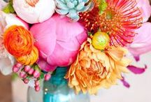 P • Flowers & Plants