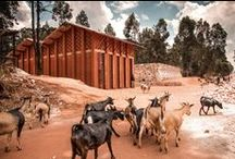 Animals & Architecture