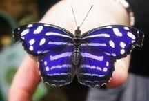 Butterflies :3