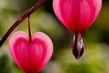les coeurs de Marie / les cœurs et moi....une longue histoire qui n'est pas prête de s'arrêter!