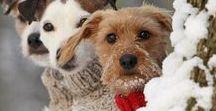 Kedvenceinknek :) / Gondoskodjunk kis kedvenceinkről is a hidegben. Ötletek, segédletek, kutyaruha modellek. Kutyahidegben kutyaruhát a kutyákra.