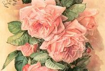 Roses Borders frame