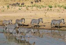 Op safari in Afrika.