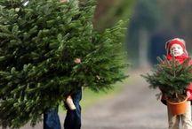 O dennenboom,  o dennenboom. / Kies een mooie kerstboom uit en haal de frisse dennengeur in huis!