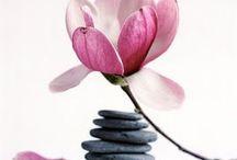 D É C O Équilibre, Méditation For the Home / Extrait de mon travail photographique édité en décoration murale autour de la méditation, zen avec des branches fleuries ou fleurs de cerisier, pommier, magnolias...