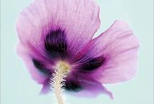 Inspire Color Block   Vintage   Floral / Extraits de mon travail photographique édité en décoration murale ou posters  Recherches couleur