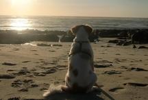 Fred / My love, my dog!