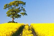 ~*~ Mellow Yellow ~*~