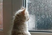 ~*~ Rainy Weather ~*~