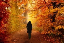 ~*~ Fall ~*~