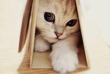 { CAT - MANEKI NEKO }