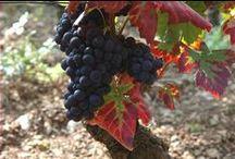 Beaune, capitale du vignoble