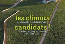 Les climats de Bourgogne à l'UNESCO
