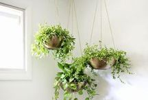 Inside Garden Ideas / Bring your garden indoors with these creative ideas of how to use plants and flowers in your home decor.