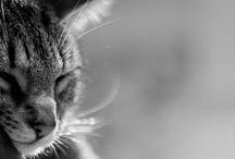 Crazy Cat Lady! :) / by Julie Allen