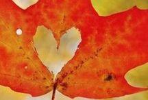 Autumn / .....