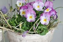 Blomster & planter - Flowers / by ★☆★ Marianne ☆★☆