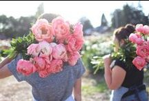 flowers / by Christine Chitnis