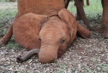 Tembo Éléphant Gaja Elefante EλέΦαντας Eilifint Elefant Ganesha / by Katie Link