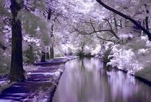 Lilac, purple and lavendar
