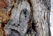 d r y a d s / A dryad is a tree nymph, or female tree spirit, in Greek mythology