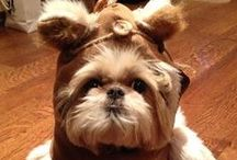 Dogs / Cute dogs and things for your pet pooch.