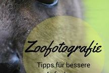 Fotografie l Tipps / Tipps rund um das Thema Fotografie