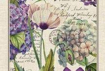 Flores silvestres y hojas