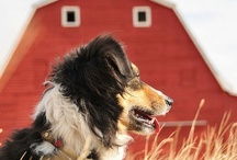Country Living! On the Farm, In the Barn, and Under the Stars = A Wonderful Life! / by C P