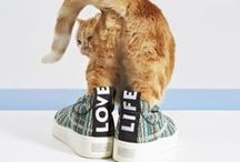 """Cats and Flats / """"The Cat and the Flat: Spring Shoes and Kittens Make the Perfect Pair"""", """"VOGUE"""" 2014"""