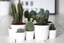 Plantas&Horta