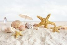 Seashells by FantaSea / The sea's never-ending gift...