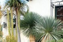 `Gran Canaria