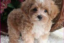 puppies cute..