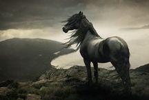 Horses / They make me happy.