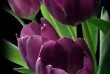 fleurs / jardin