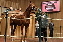 November Sales 2013 / by The Blood-Horse