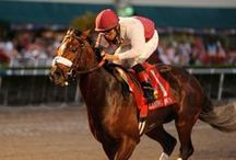 Claiming Crown 2013 / by The Blood-Horse