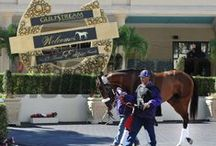 Mucho Macho Man / by The Blood-Horse