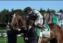Will Take Charge / by The Blood-Horse