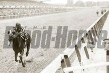 Secretariat / by Blood-Horse
