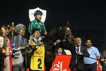 Dubai World Cup Carnival 2014 / View images from the exciting races leading up to the Dubai World Cup, the world's richest Thoroughbred horse race! / by The Blood-Horse