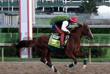 2014 Kentucky Derby (and Oaks) Works / Images of horses preparing to run in the 2014 Kentucky Oaks and Derby. / by The Blood-Horse