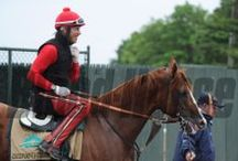 California Chrome / by The Blood-Horse