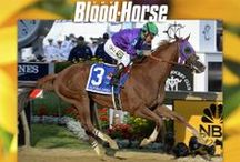 2014 Preakness Stakes / by The Blood-Horse