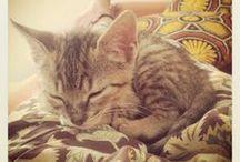 Dοiδα / My sweet crazy cat