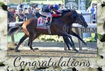 2014 Belmont Stakes / by The Blood-Horse