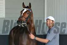 Untapable / by The Blood-Horse