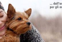 immagini / Amici animali